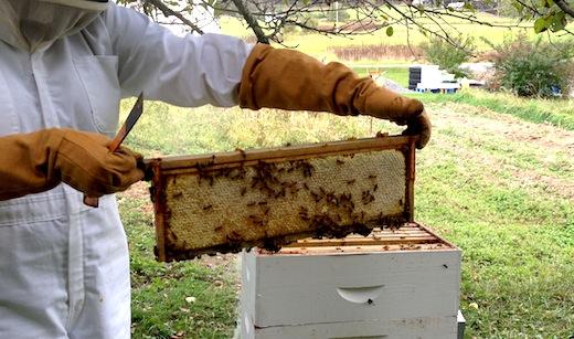 Frame-of-Honey