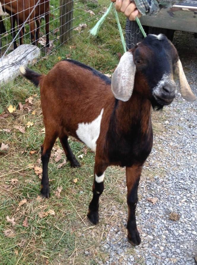 Rufus Moose